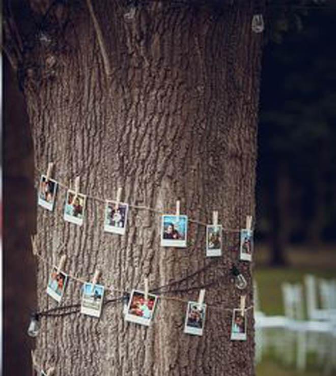 дерево украшено фотографиями семейной пары